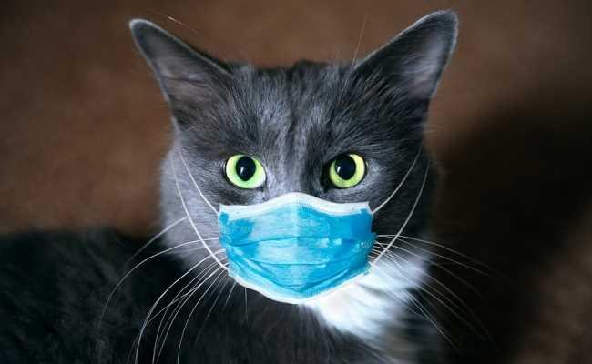 В Испании начали продавать тесты на коронавирус для животных